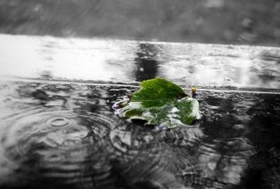 puddle on roof